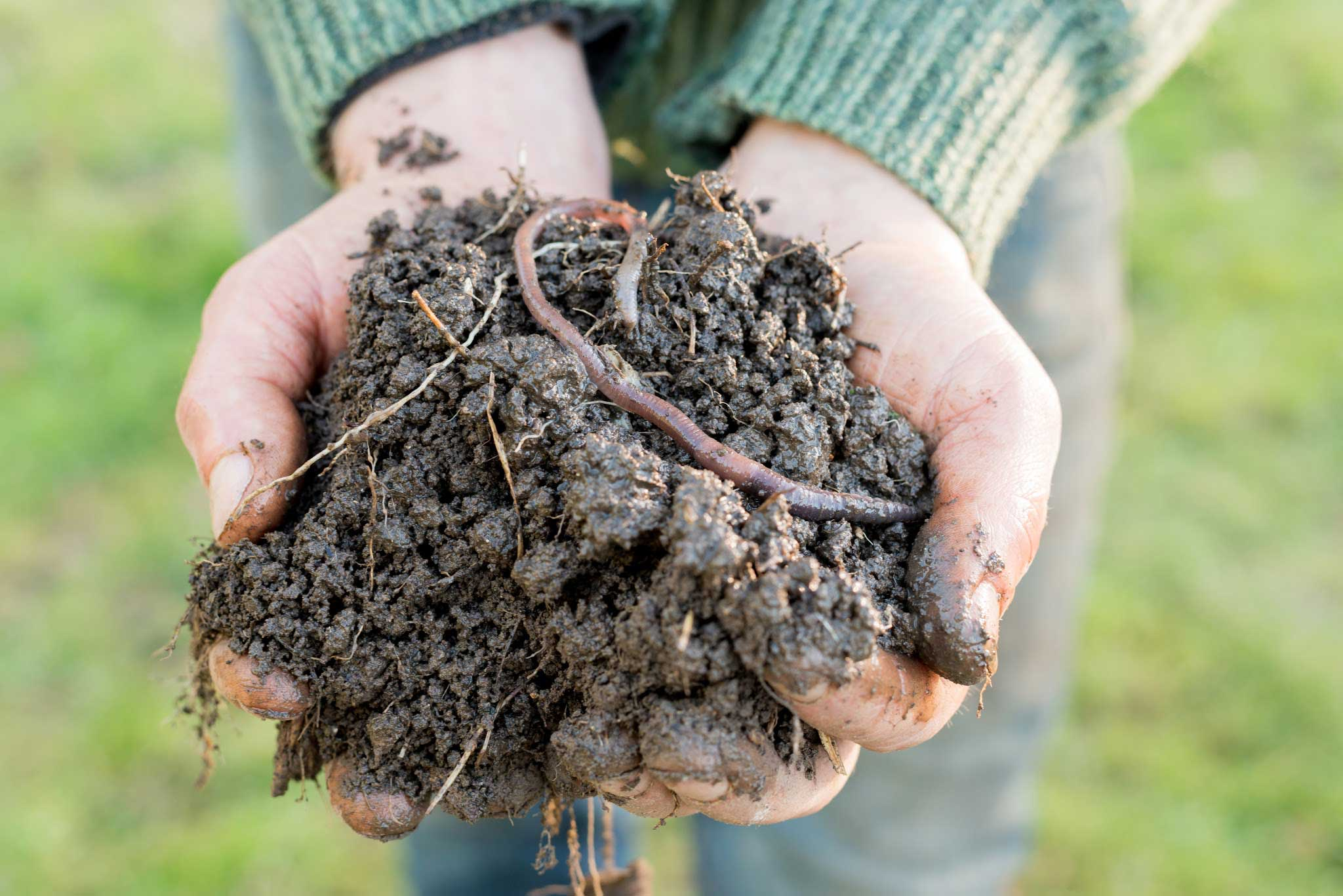 person standing outdoors holding dirt with live earthworms in two hands