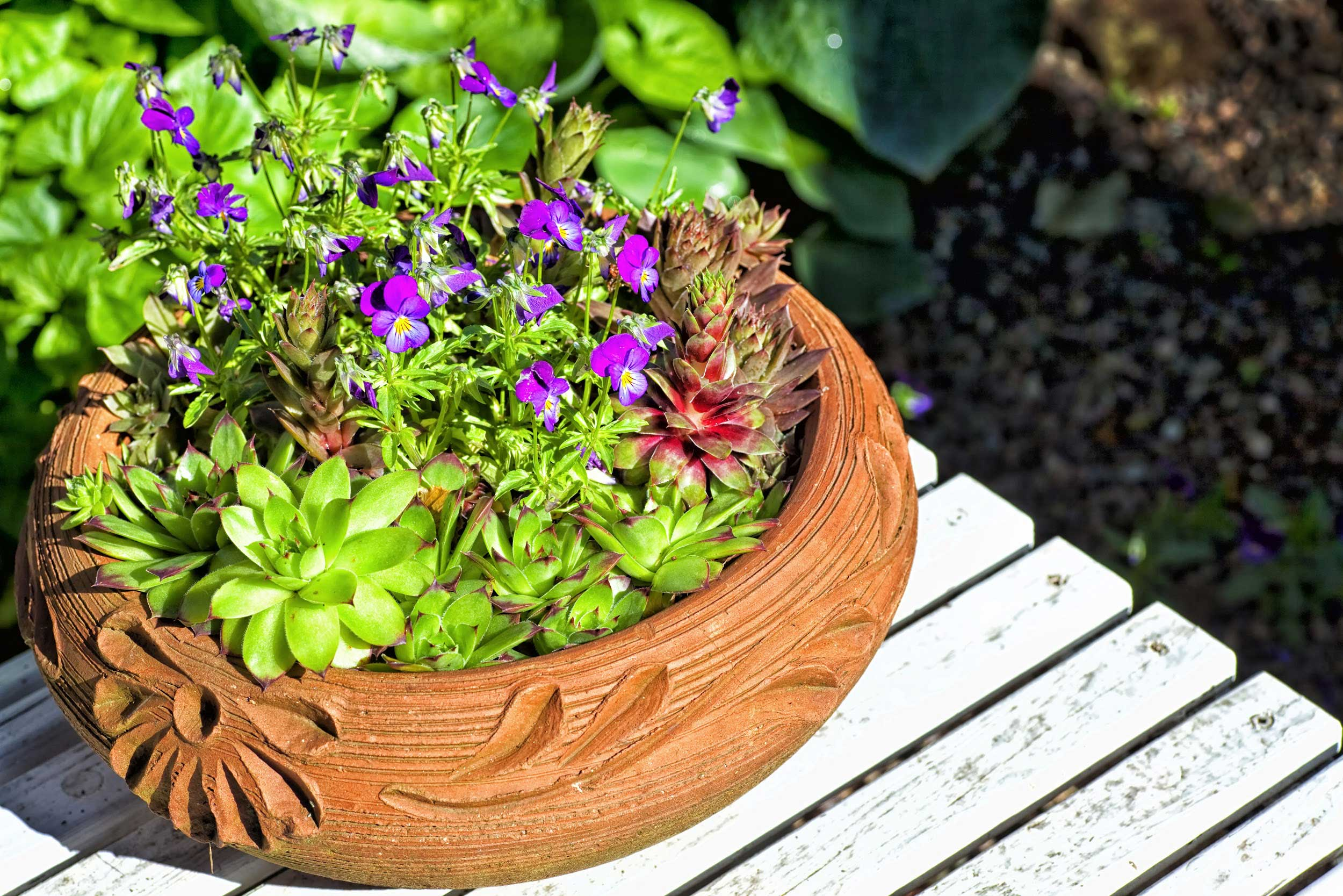 decorative flower pot with purple flowers and succulent plants on patio